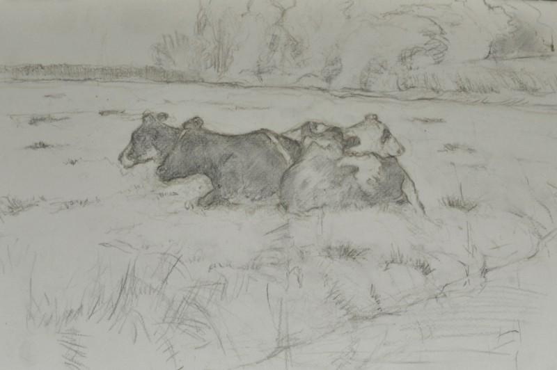 groepje koeien