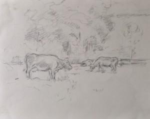 grazende koeien tekening 30x40